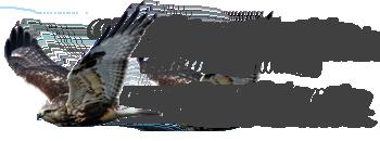 Vogelkijkhut – De Havik